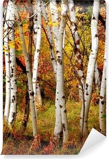 Fotomural Estándar Otoño de árboles de abedul