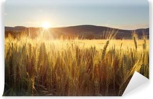 Fotomural Estándar Puesta de sol sobre campo de trigo.