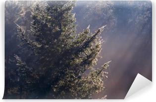 Fotomural Estándar Rayos de sol en bosque de niebla de coníferas