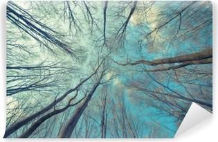 Vinyl-Fototapete Bäume Web-Hintergrund