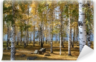 Vinyl-Fototapete Birkenwald im Herbst