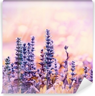 Vinyl-Fototapete Blühende schöne lila Blumen Wiese