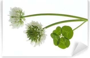 Vinyl-Fototapete Blumen und Kleeblatt