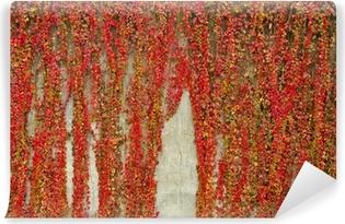 Vinyl-Fototapete Bunte Schlingpflanzen bedeckt Wand aus Beton. Herbstfarben.