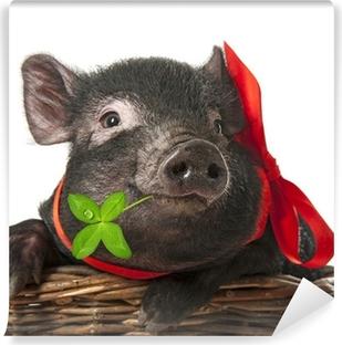 Vinyl-Fototapete Eine nette kleine schwarze Schwein sitzt in einem Korb - weißer Hintergrund