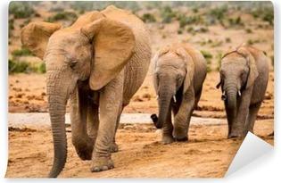 Vinyl-Fototapete Elephants