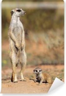 Vinyl-Fototapete Erdmännchen mit Baby neugierig, Kalahari-Wüste