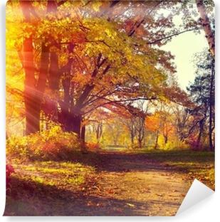 Vinyl-Fototapete Fallen. Herbstlicher Park. Herbst-Bäume und Blätter im Sonnenlicht