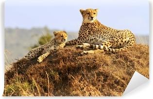 Vinyl-Fototapete Geparden auf der Masai Mara in Afrika