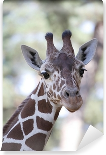 Vinyl-Fototapete Giraffe