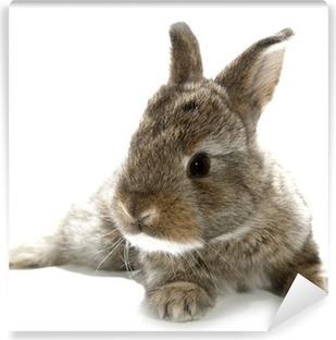 Vinyl-Fototapete Gray rabbit Hase Baby auf weißem Hintergrund isoliert
