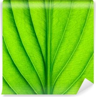 Vinyl-Fototapete Green leaf texture