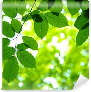 Vinyl-Fototapete Green leaves