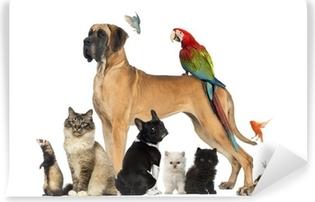 Vinyl-Fototapete Group of pets - Hund, Katze, Vogel, Reptil, Kaninchen