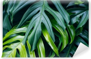 Vinyl-Fototapete Grüne tropische Blätter