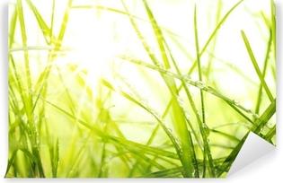Vinyl-Fototapete Grünen Sommer Gras und Sonnenlicht