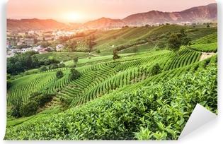 Vinyl-Fototapete Grüner Tee-Garten auf dem Hügel, china