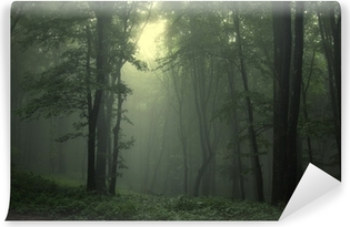 Vinyl-Fototapete Grüner Wald nach regen