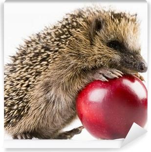 Vinyl-Fototapete Happy hedgehog
