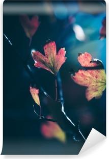 Vinyl-Fototapete Herbstblätter im Sonnenlicht