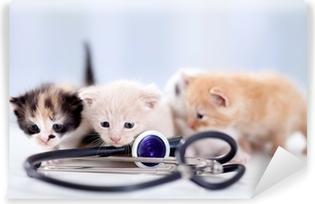 Vinyl-Fototapete Junge Kätzchen mit einem Stethoskop