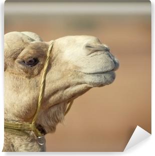 46b5c6826a25 Kamel