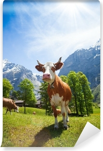 Vinyl-Fototapete Kühe in der Schweiz Berge