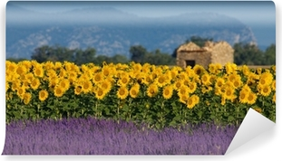 Vinyl-Fototapete Lavendel und Sonnenblumen Einstellung in der Provence, Frankreich
