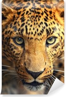 Vinyl-Fototapete Leopard Portrait