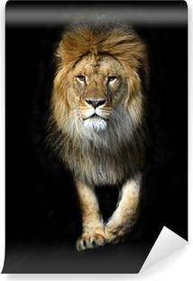 Vinyl-Fototapete Lion in ein Leichentuch