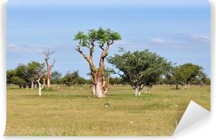 Vinyl-Fototapete Moringa-Baum in der afrikanischen Savanne, Namibia, Etosha Park