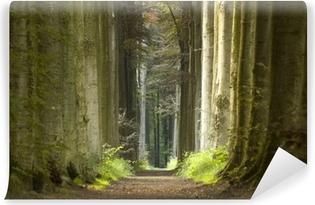 Vinyl-Fototapete Natur-Weg