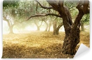 Vinyl-Fototapete Old Olive Trees