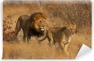 Vinyl-Fototapete Pair of Lions