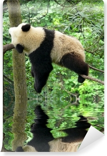 Vinyl-Fototapete Panda