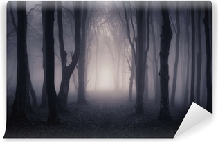 Vinyl-Fototapete Pfad durch einen dunklen Wald bei Nacht