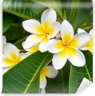 Vinyl-Fototapete Plumeria Frangipani Blumen