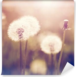 Vinyl-Fototapete Pusteblumen auf einer Wiese, Vintage-Stil