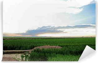 Vinyl-Fototapete Reisfelder La Albufera Naturschutzgebiet in der Provinz Valencia Cullera