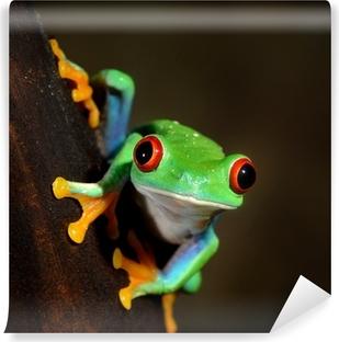Vinyl-Fototapete Rote-Augen-Frosch Rotaugenlaubfrosch im Terrarium