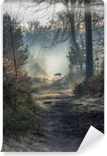 Vinyl-Fototapete Sanglier en forêt de fontainebleau