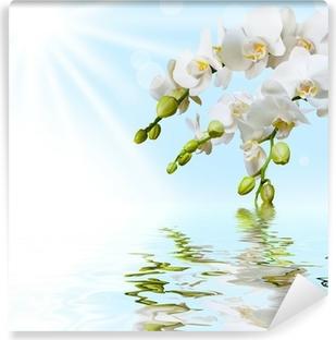 Vinyl-Fototapete Schöne weiße Orchidee
