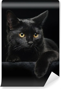 Vinyl-Fototapete Schwarze Katze mit gelben Augen