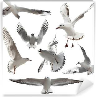 Vinyl-Fototapete Seagulls Isoliert