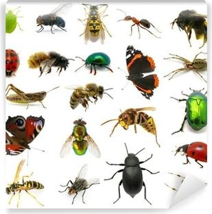 Vinyl-Fototapete Set von Insekten