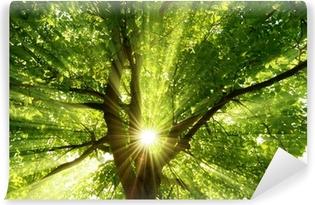 Vinyl-Fototapete Sonne strahlt explosiv durch den Baum