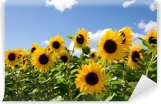 Vinyl-Fototapete Sonnenblumen