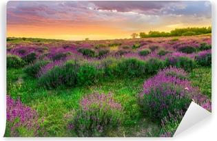 Vinyl-Fototapete Sonnenuntergang über ein Sommer Lavendel-Feld in Tihany, Ungarn