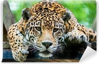 Vinyl-Fototapete Südamerikanischen Jaguar