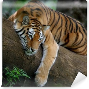 Vinyl-Fototapete Tiger auf Baum